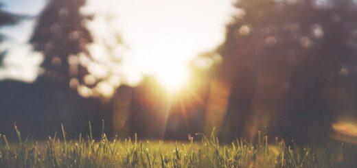 Dewey sunrise in park.